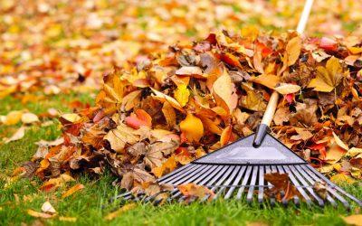 À l'automne, je jardine!