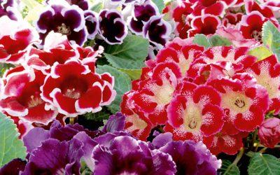 Les plantes hivernantes
