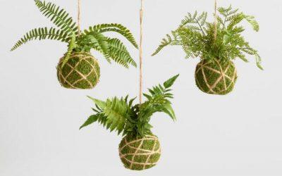 Kokedama, l'art de jardiner autrement