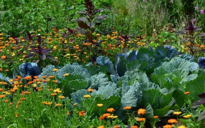Biodiversité au jardin